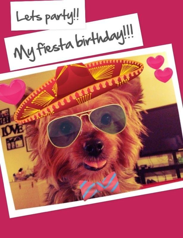 Happy Birthday Yumi Mexican Fiesta Cutie Patroller